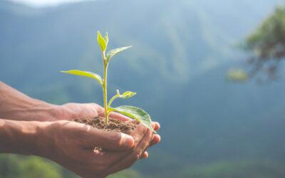 Ayudas a empresas para inversiones en medio ambiente 2021. Procedimiento ordinario.
