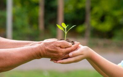 Ayudas a empresas para inversiones en medio ambiente 2021. Procedimiento simplificado.